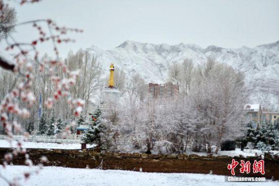 甘肃祁连山下雪后现雾凇美景