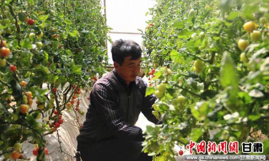 榆中县党员致富带头人为农村同步小康提供智力