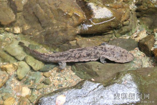 小陇山的珍贵野生动物图片