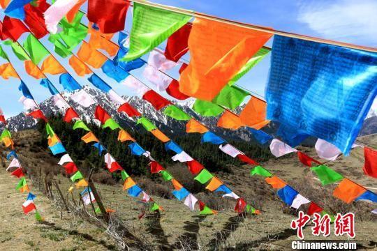 图为藏族民众搭建的经幡. 陈礼 摄